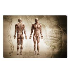 Tablou DualView Startonight Anatomie, luminos in intuneric, 60 x 90 cm