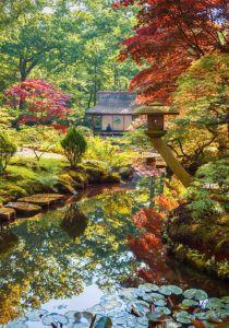 Puzzle Grafika - Zen Forest, 1.000 piese (55253)