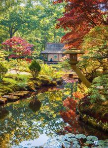 Puzzle Grafika - Zen Forest, 300 piese (55254)