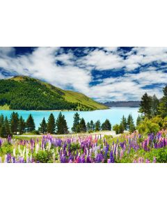 Fototapet Startonight Covor de flori spre lac, luminos in intuneric, 3.66 x 2.56 m