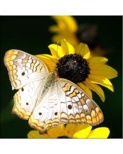 Tablou DualView Startonight Fluture pe floare, luminos in intuneric, 30 x 30 cm
