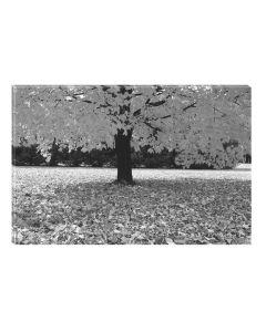 Tablou Alb-Negru Abstract Startonight, Copacul rege, luminos in intuneric, 60 x 90 cm