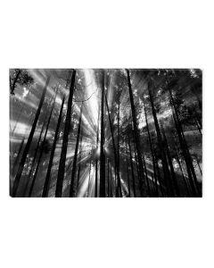 Tablou Alb-Negru Abstract Startonight, Lumina si intuneric, luminos in intuneric, 60 x 90 cm