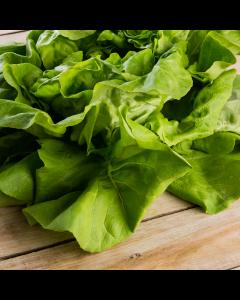 Salata verde Romania per bucata
