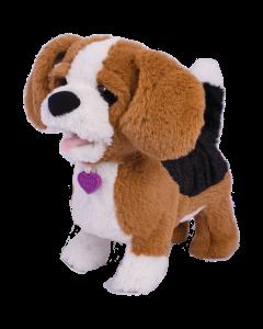 Catelusul Beagle Zigo