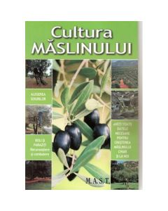 Cultura maslinului
