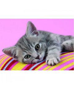 Puzzle Clementoni - Affectionate Little Cat, 500 piese (3569)
